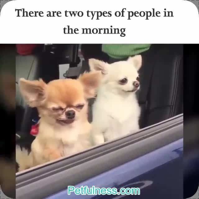 Latest Funny Videos Satisfying Videos There are two types of people in the morning. I have a satisfying video for you , that is sure to put a smile on your face today! #satisfyingvideos #video 4