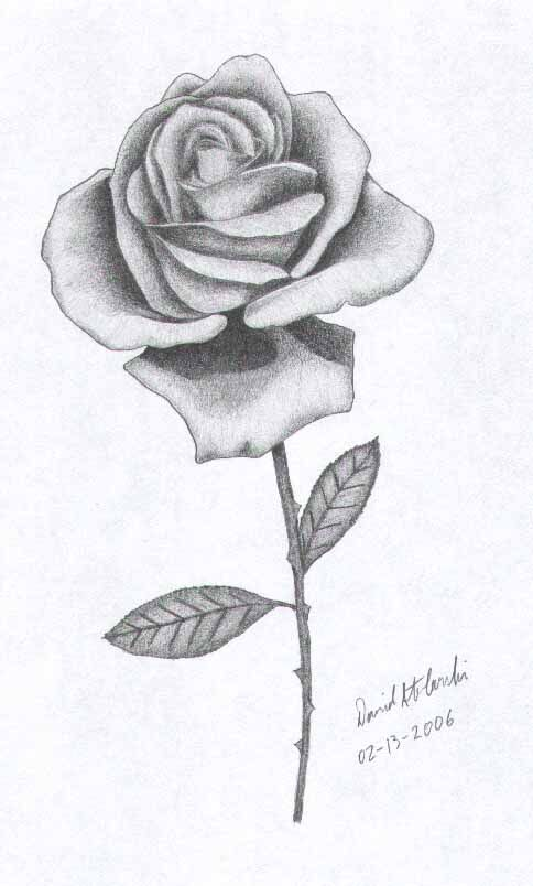 Rose Drawings | Rose pencil drawing by Skytiger on deviantART ...
