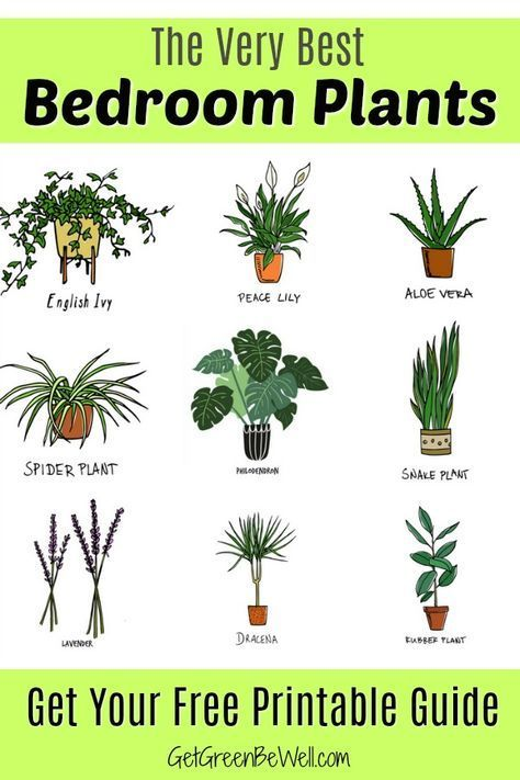 Free Printable with the Best Bedroom Plants for Better Sleep tonight! These are …