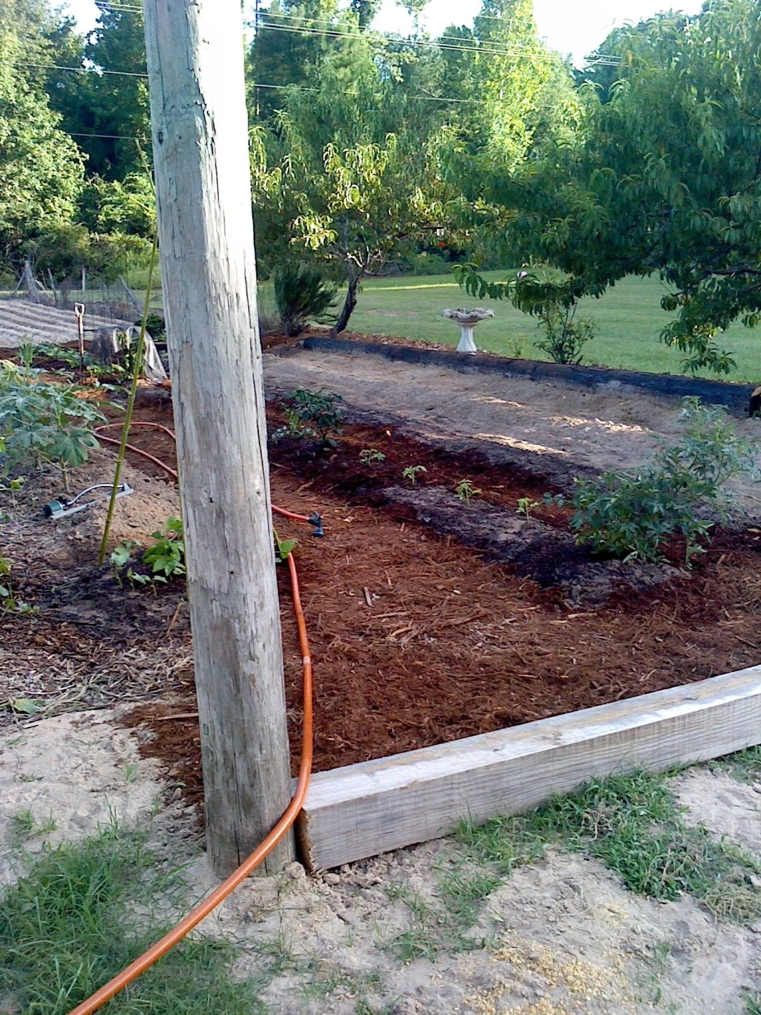 Fall Planting Guide East Texas Http Easttexasgardening 640 x 480