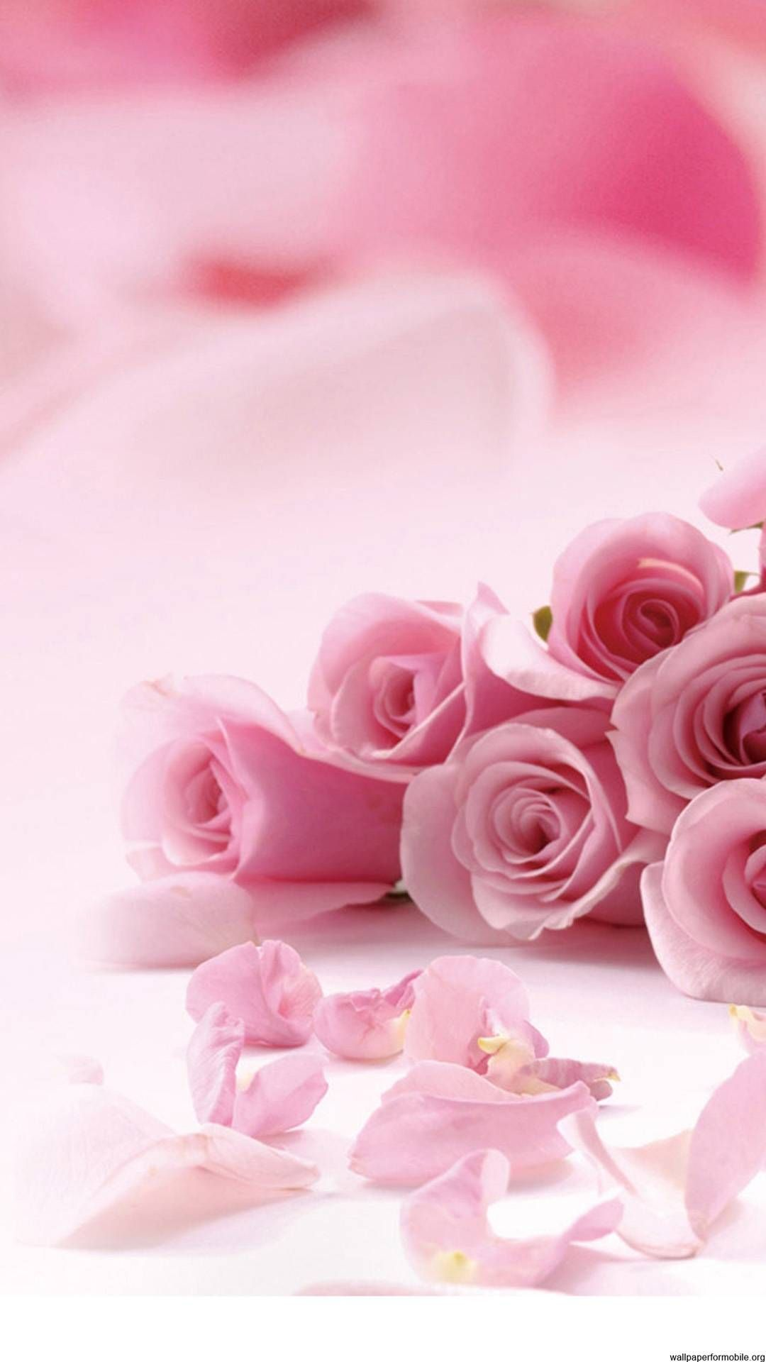 http://wallpaperformobile.org/12578/roses-pictures-free.html - Roses Pictures Free