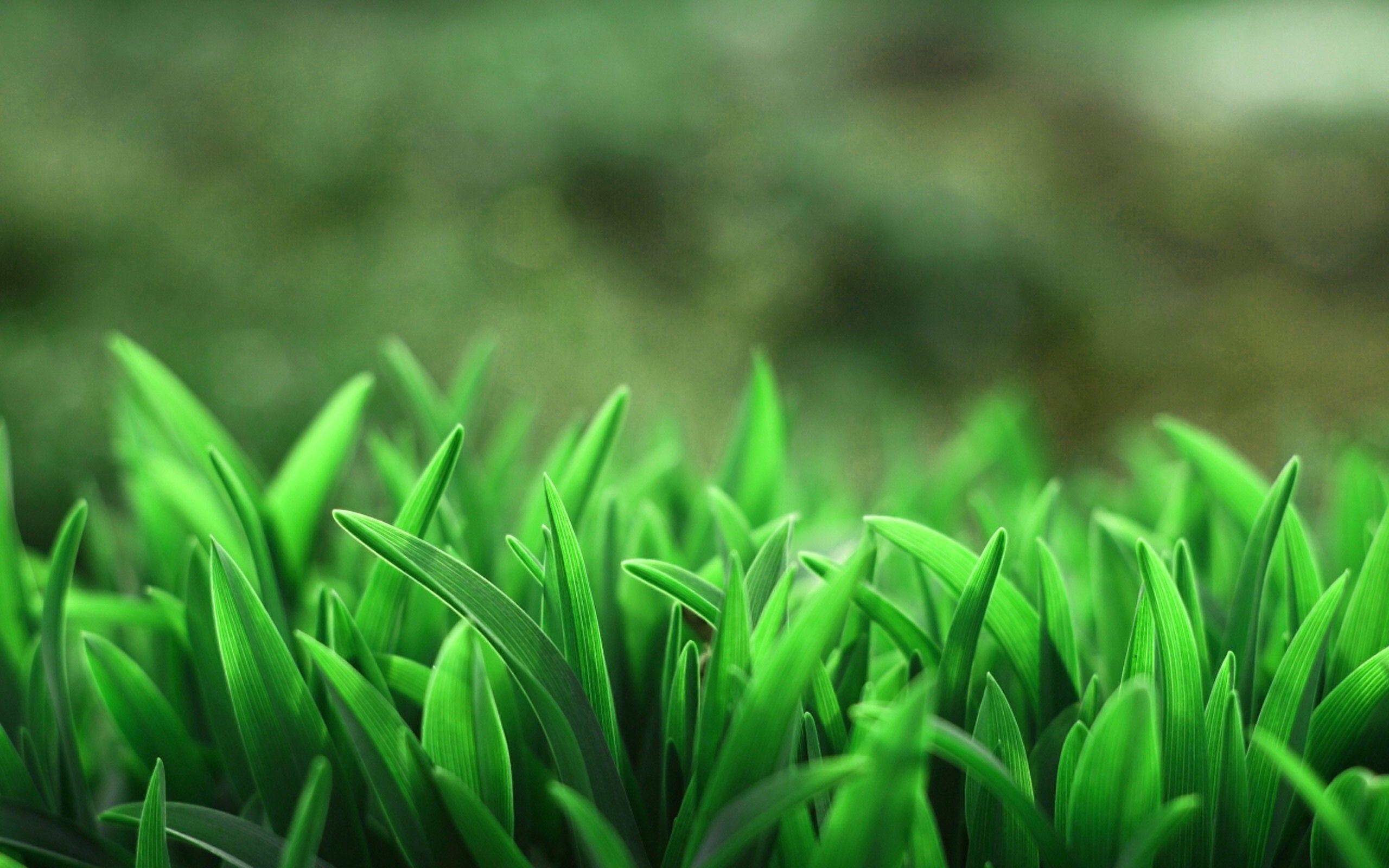 #macro, #blurred, #nature, #plants, #grass, wallpaper ...