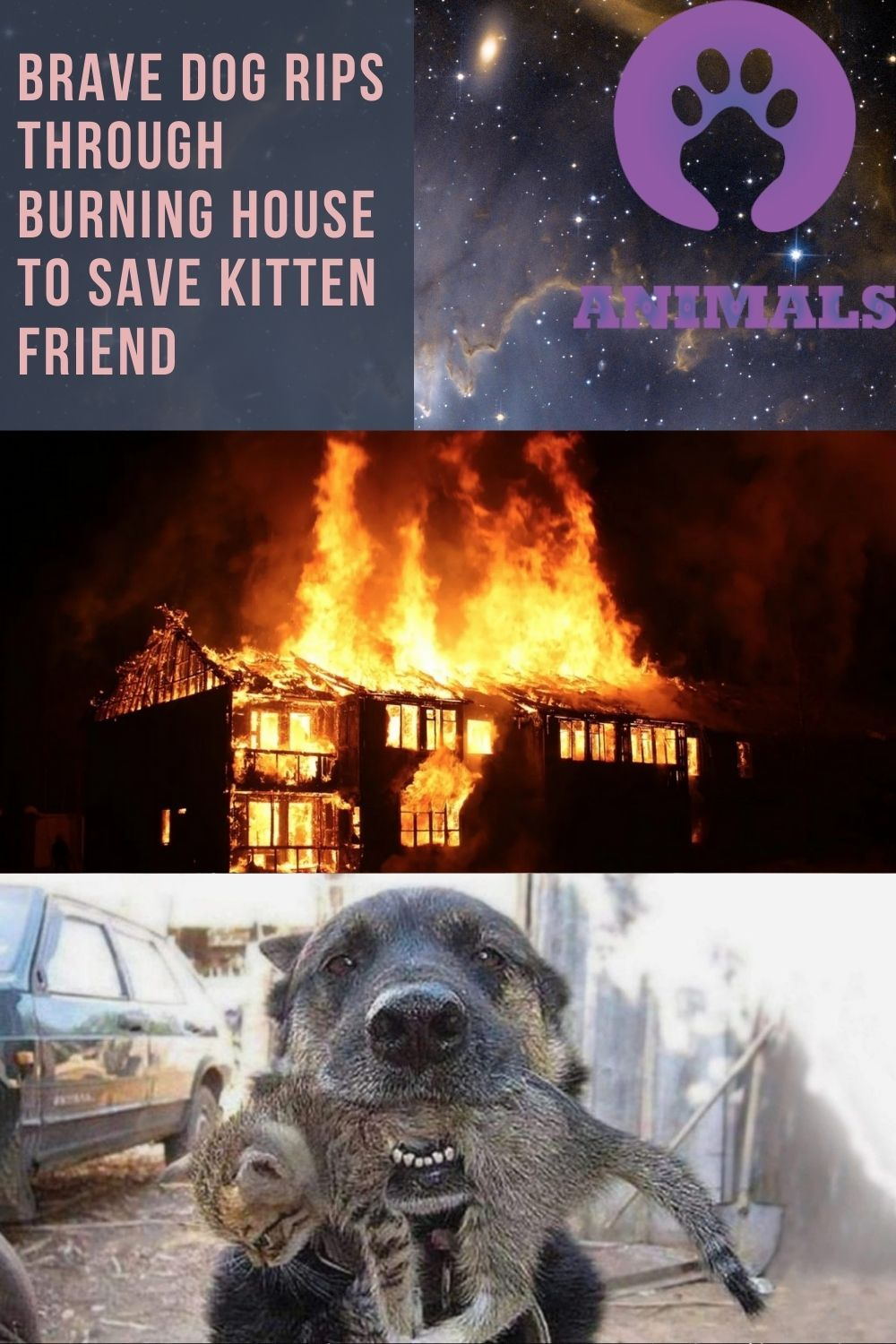 Halloween 2020 Burning House Brave dog rips through burning house to save kitten friend in 2020