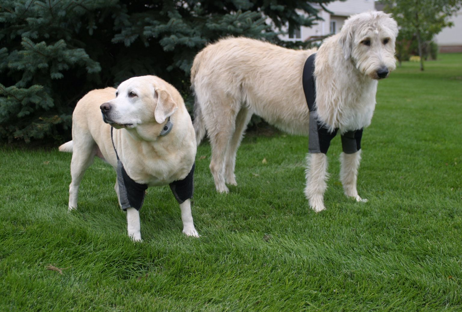two dogs wearing the comfortable protective elbow sleeves