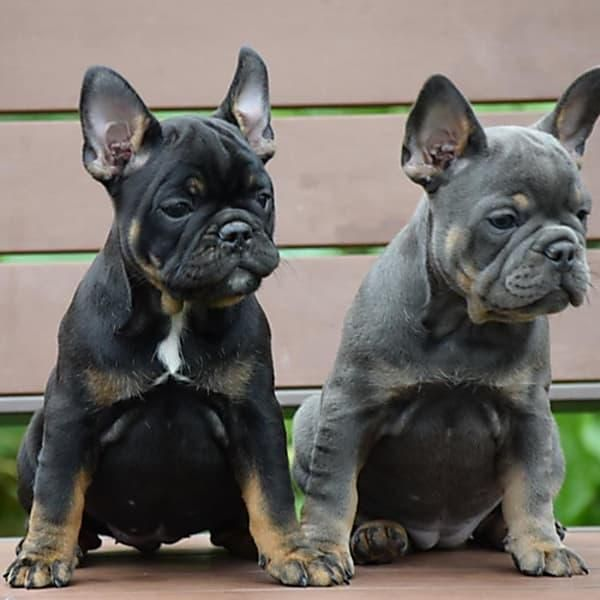 24 Dog Breeds You Want To Keep Away From Children Dog Breeds