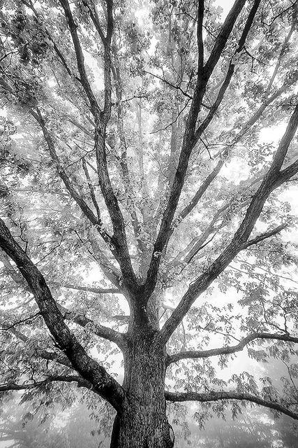 Cool Tree Black And White: Black, White Tree, Black, White