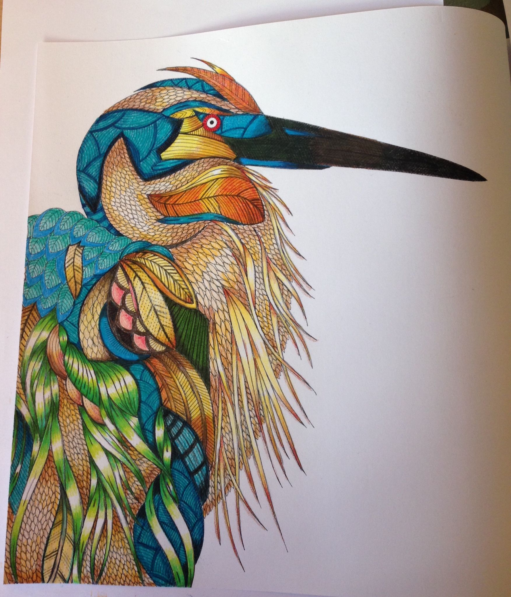 Coloring book animal kingdom - Millie Marotta Google Zoeken Colouring For Adultsadult Coloringcoloring Bookswatercolor Pencilswatercolor Paintingwatercolorsanimal Kingdomdrawing