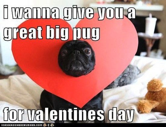 Great Big Pug Valentines Day Valentines Day Quotes Happy Valentines