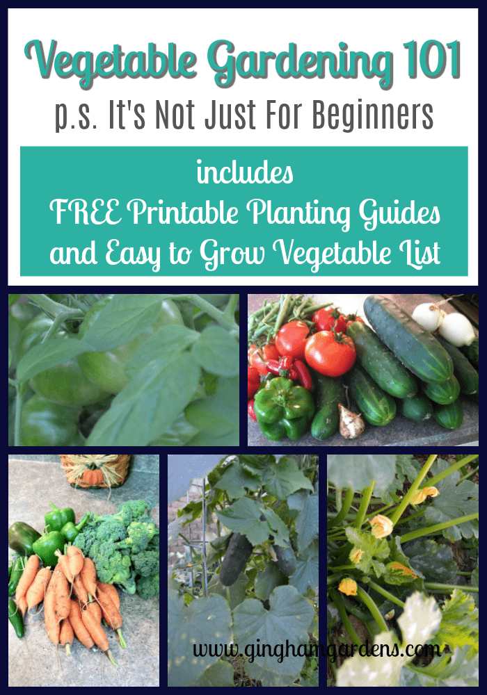 Vegetable Gardening 101 It S Not Just For Beginners 400 x 300