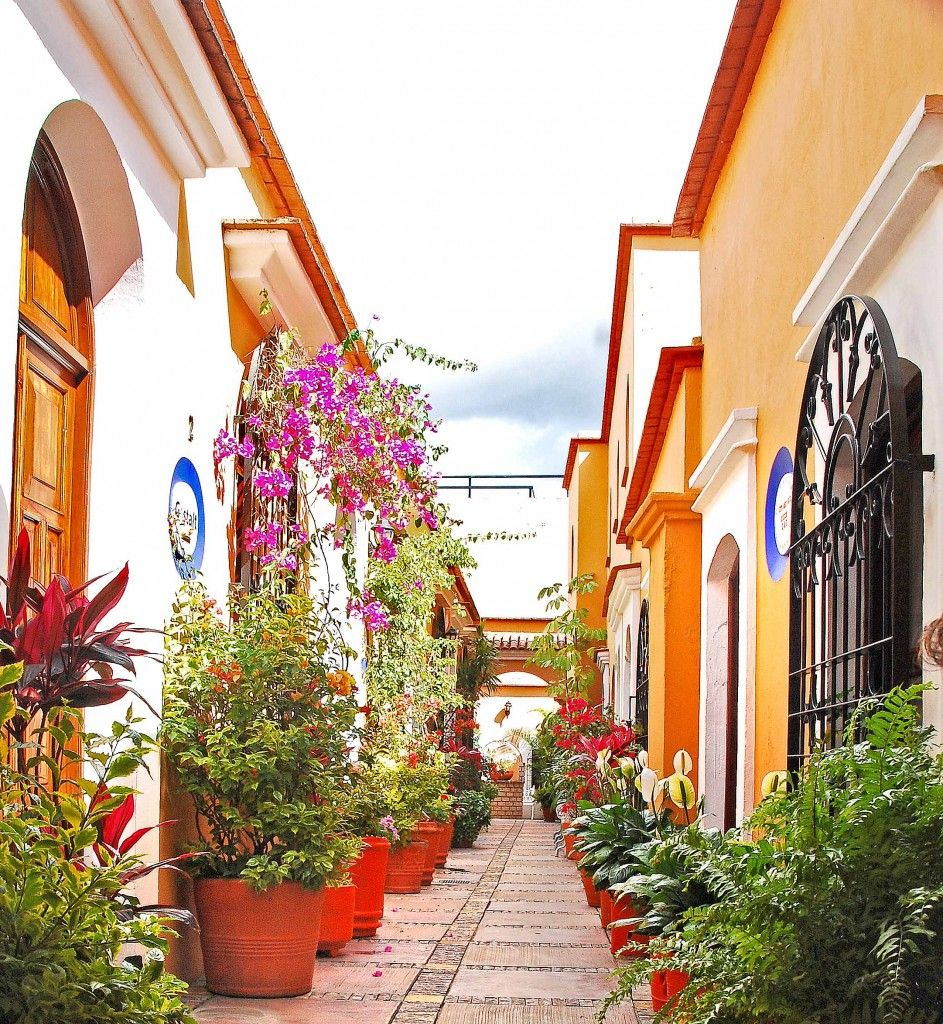 Mexico is just so lovely. Love the colors and flora!