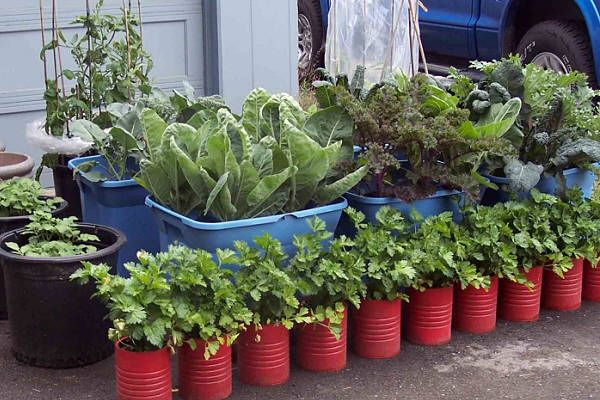 G is for Growing Gardens in Alaska – Container Gardening AtoZChallenge
