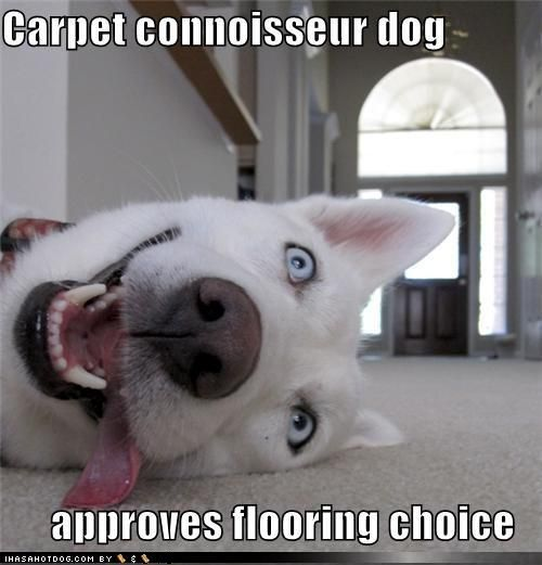 Our Pets definitely know more about flooring then we do.