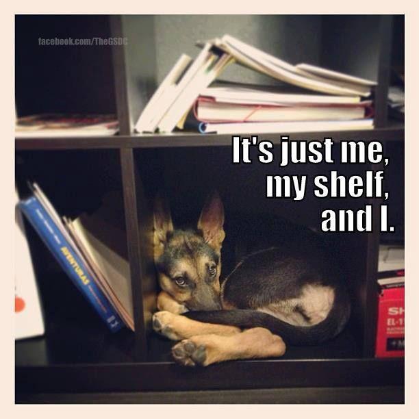 """It's just me, my shelf and I."" ~ Dog Shaming shame - German Shepherd Dog"