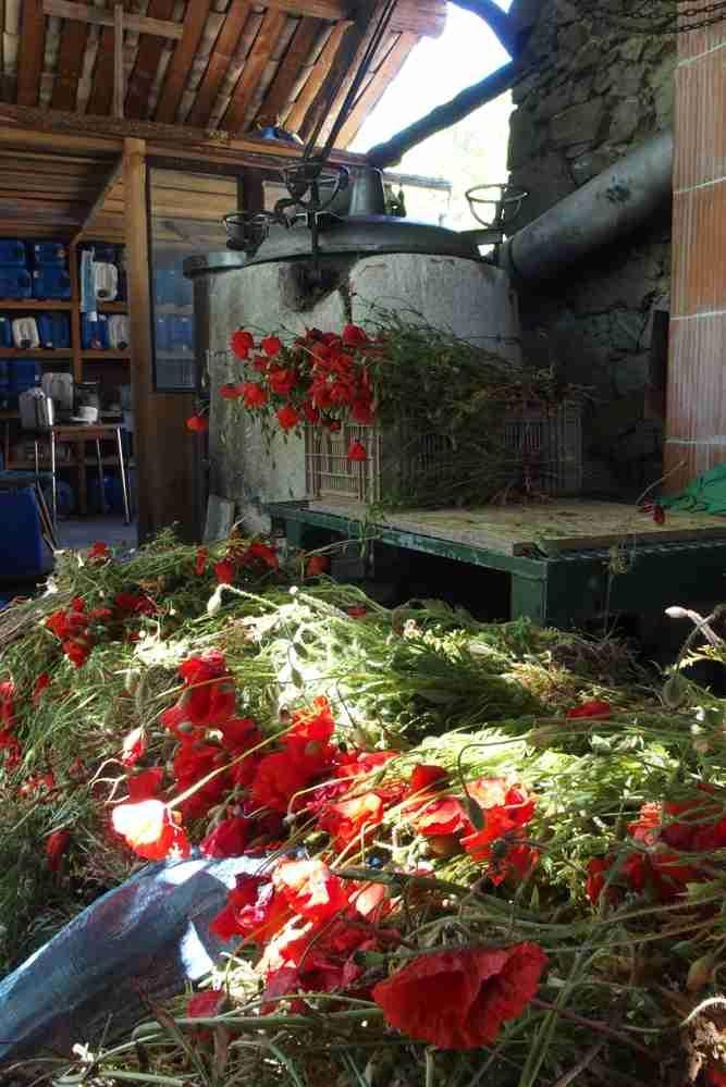 FermedeSaussac.fr : producteur/distillateur bio : hydrolats , plantes aromatique, huiles essentielles, cosmétiques biologique...