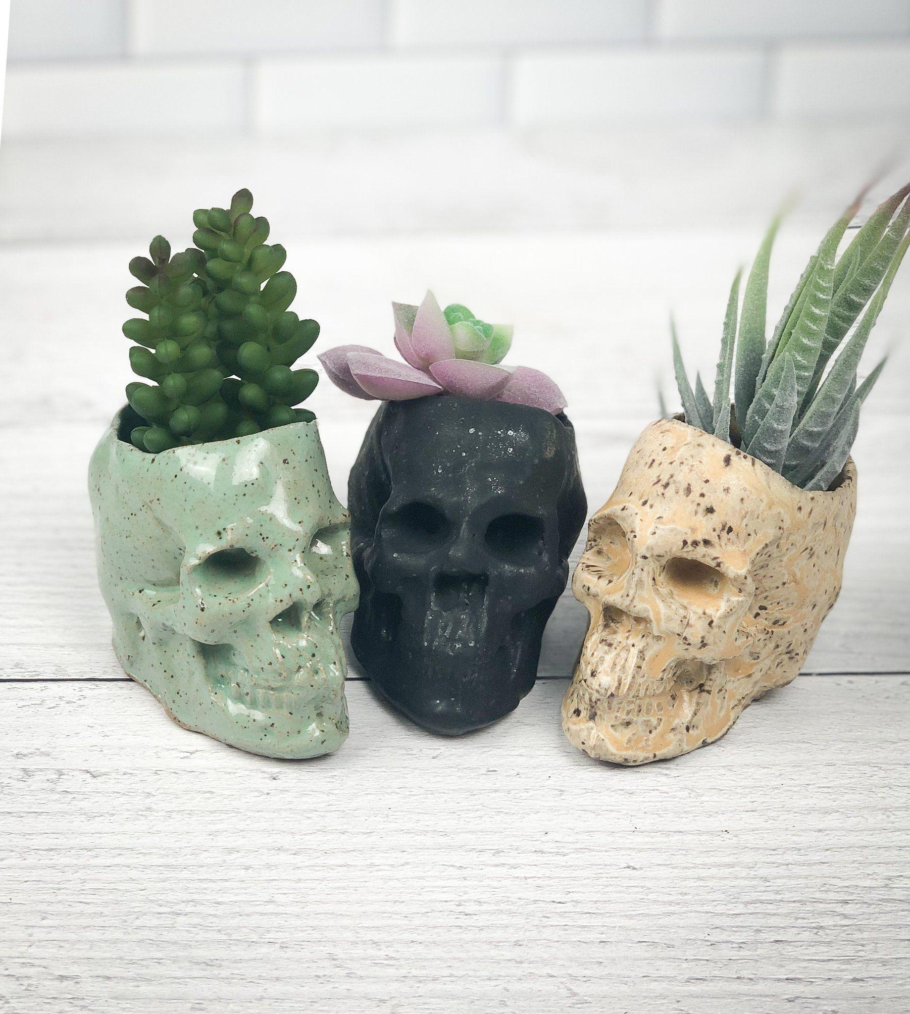 velvet skull planter