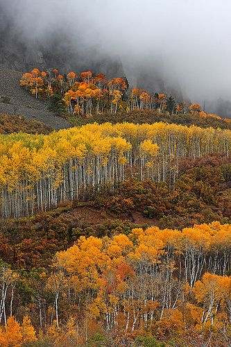 Kebler Pass Colors | Flickr - Photo Sharing! Gunnison, Colorado