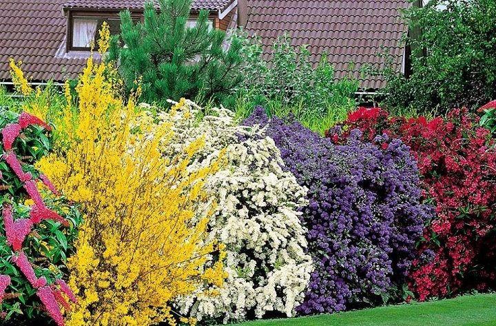 Rboles setos y plantas de privacidad en el jard n - Arbustos perennes para jardin ...