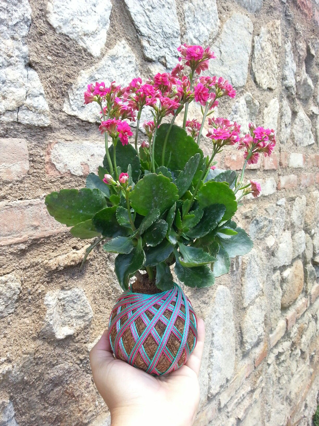 Kokedama Kalanchoe Venezuela Kalanchoe Pinterest Plants  # Faire Support Aquarium Beton Cellulaire