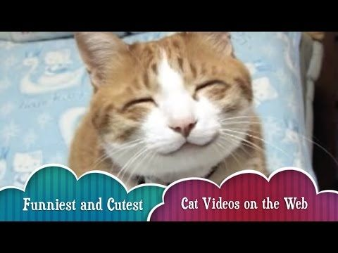 Funny Cat Compilation - Best, Funniest, and Cutest Cat Videos on the Internet! Big Cat Fails - http://positivelifemagazine.com/funny-cat-compilation-best-funniest-and-cutest-cat-videos-on-the-internet-big-cat-fails/ http://img.youtube.com/vi/cJlLHUJQsgs/0.jpg                                             This 20 minute complitation is a collection of the cutest, funniest, and best cat videos on the Internet ever!    source                                   Please foll
