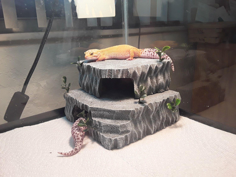 leopard gecko hide herphomes vivarium decor stackable hide