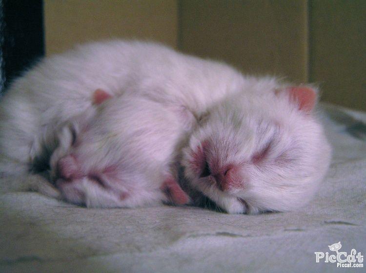 Newborn Kittens Newborn Kittens Kittens Cutest Kittens