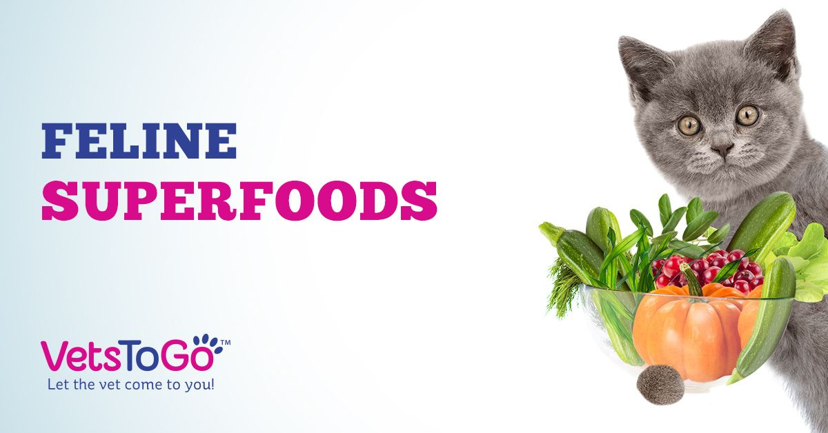 5 Feline Superfoods Your Cat Should be Eating Right Meow