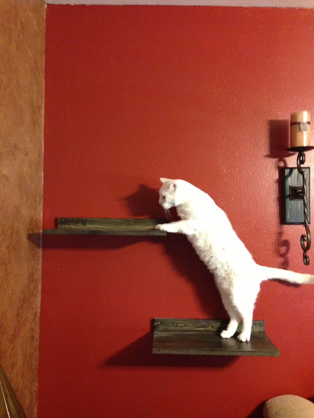 Cat climbing shelf - A perfect perch for your feline friend by JTWoodworks on Etsy https://www.etsy.com/listing/163207017/cat-climbing-shelf-a-perfect-perch-for