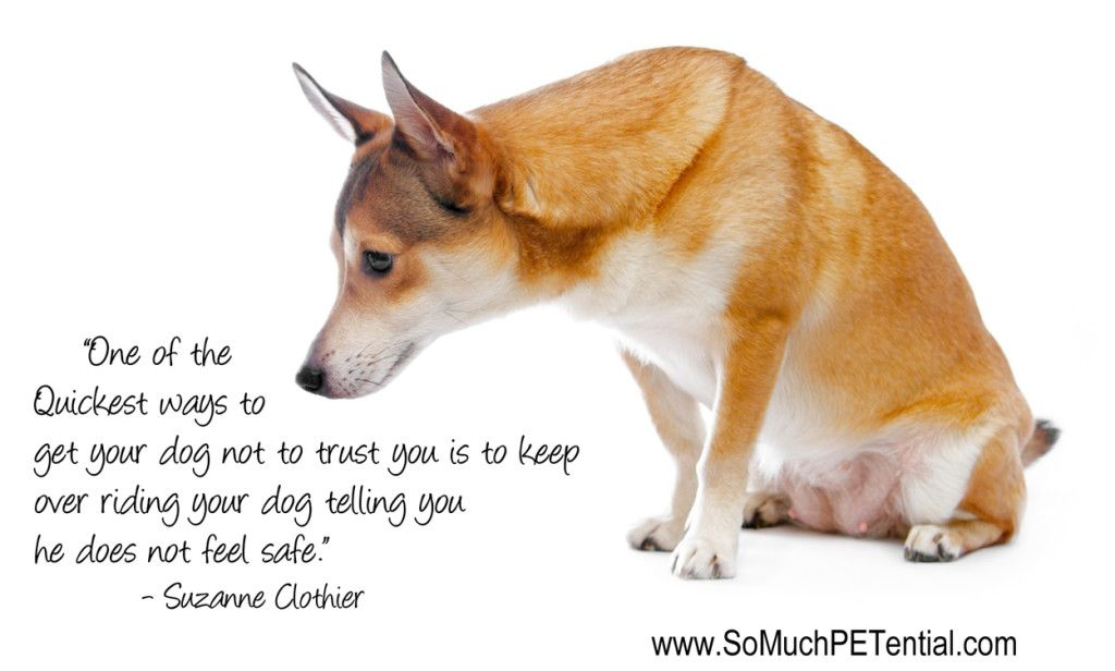 Hear Your Dog When He Says He Does Not Feel Safe Dog Training