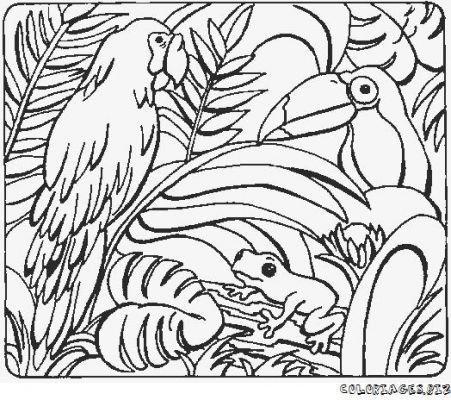 Pin by flamant rose on coloriage pinterest coloriage perroquet coloriage and coloriage animaux - Coloriage perroquet a imprimer ...