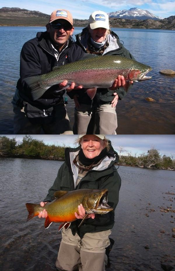 Beautiful rainbow and brook trout  | Fishbox fans | Fish, Crappie