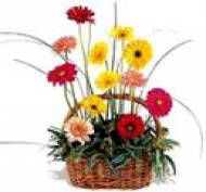 12 Mixed Gerbera Basket Visit Our Site Www Chennaiflowers Com Flowers Type Birthday Flowers To Chennai Flower Delivery