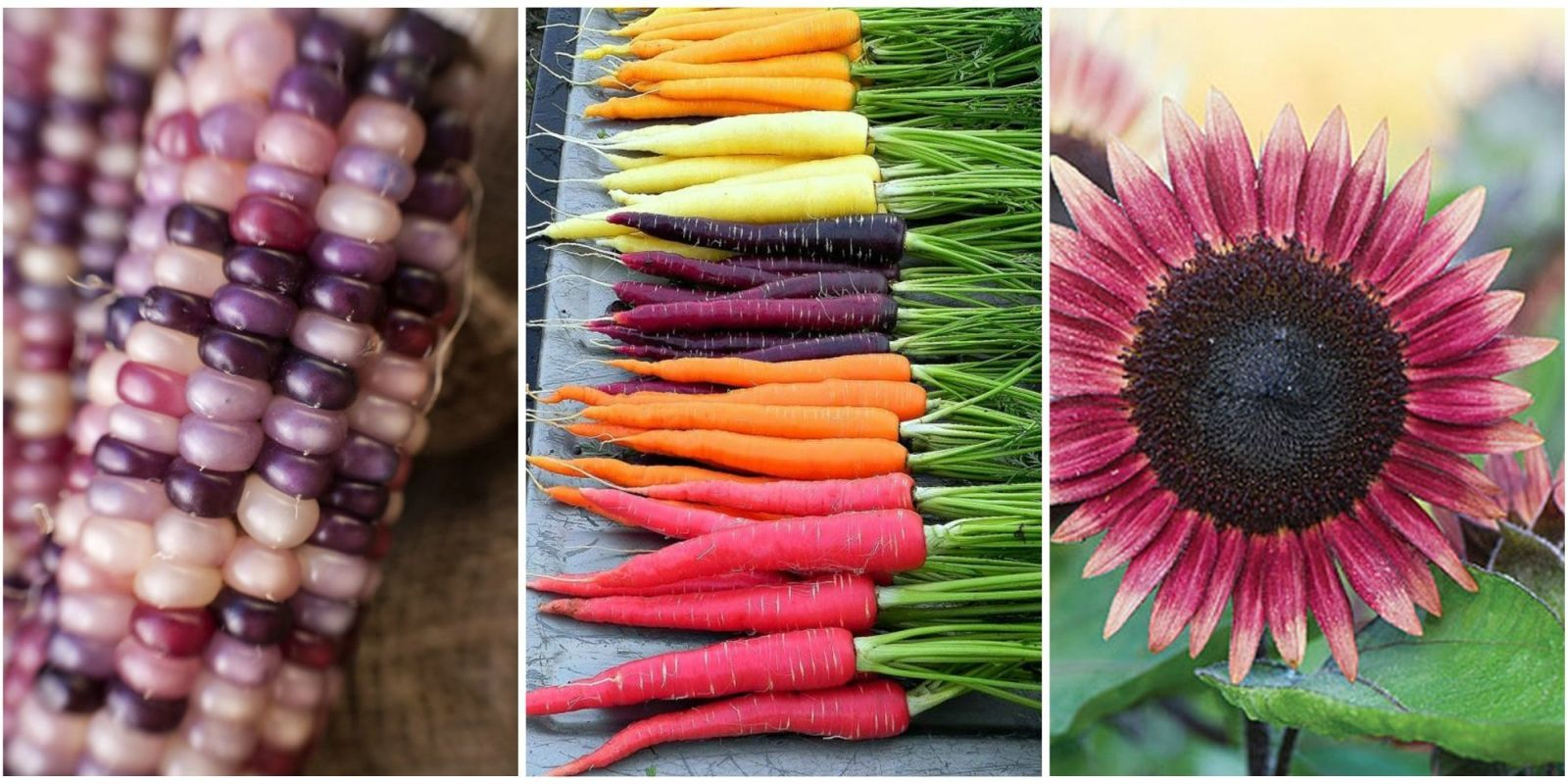 13 Unique Seeds You Should Plant In Your Garden With Images