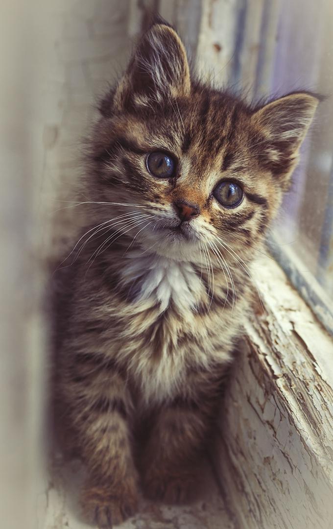 "Котёнок в окне © ODmitrijS "" Cute cats photos, Kittens"