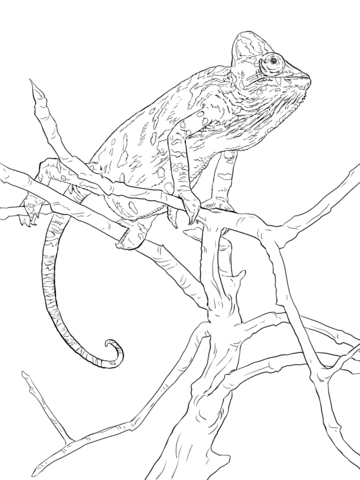 Realistic Veiled Chameleon Coloring Page Coloring Pages Butterfly Coloring Page Veiled Chameleon