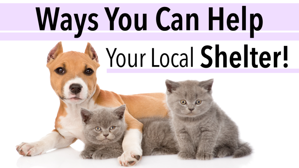 10 Easy Ways To Help Your Local Shelter That Don T Involve Extra Money Animal Shelter Volunteer Animals Animal Rescue Shelters