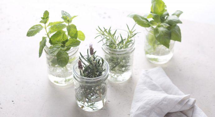 10-hierbas-que-puedes-cultivar-en-interiores-durante-todo-el-ano