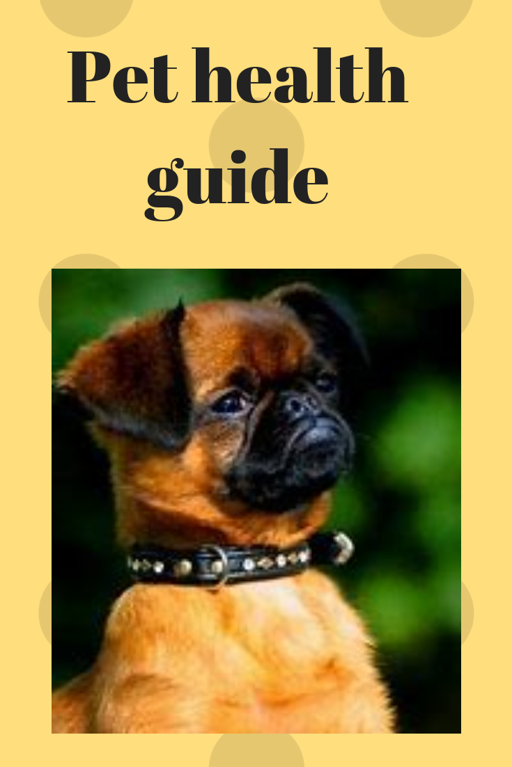 Pet Health Guide Cleanliness Should Be Paramount In The Life Of The Pet Which Means That The Pet S Hygiene S Holistic Dog Care Pet Health Pet Health Insurance