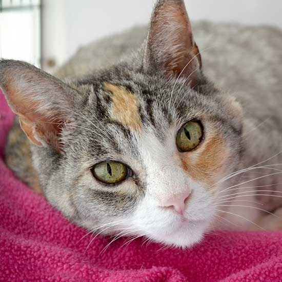 9 7 16 Dog Adoption San Diego Adopt A Dog Cat Adoption San Diego Adopt A Cat Helen Woodward Animal Center Kitten Adoption Cat Adoption Cats