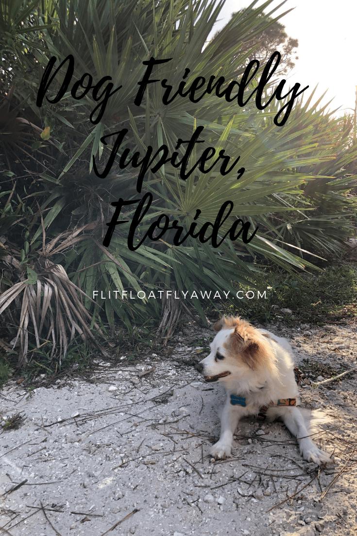 Dog Friendly Jupiter Florida Dog Friends Florida Dogs