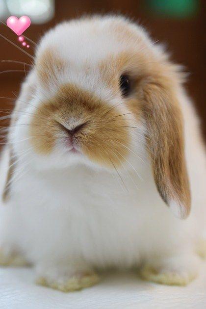 ラビッツブログ Rabbits ラビッツ うさぎブリーダー専門店 大阪 かわいい動物の赤ちゃん かわいいウサギ かわいい動物の写真