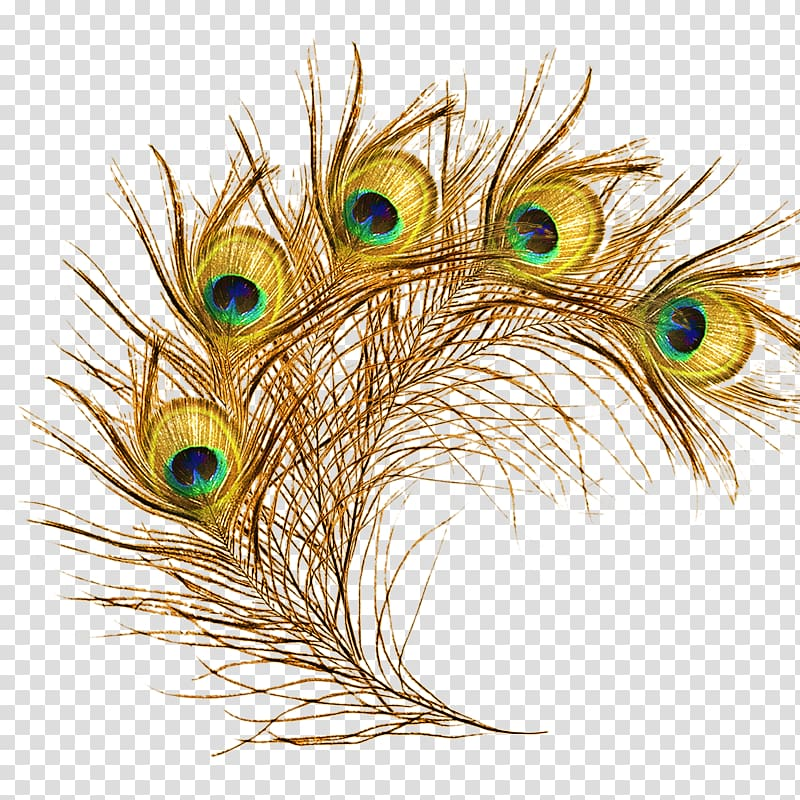 The Floating Feather Peafowl Peacock Transparent Background Png Clipart Feather Illustration Peacock Artwork Feather Background