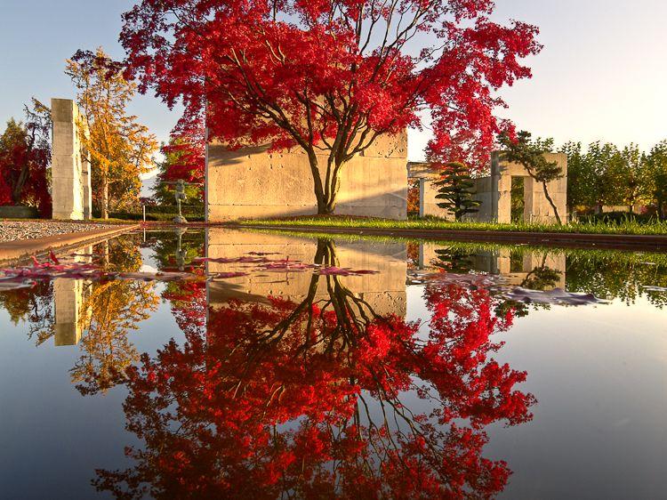 tree museum by enzo enea zurich, switzerland zurich, switzerland,