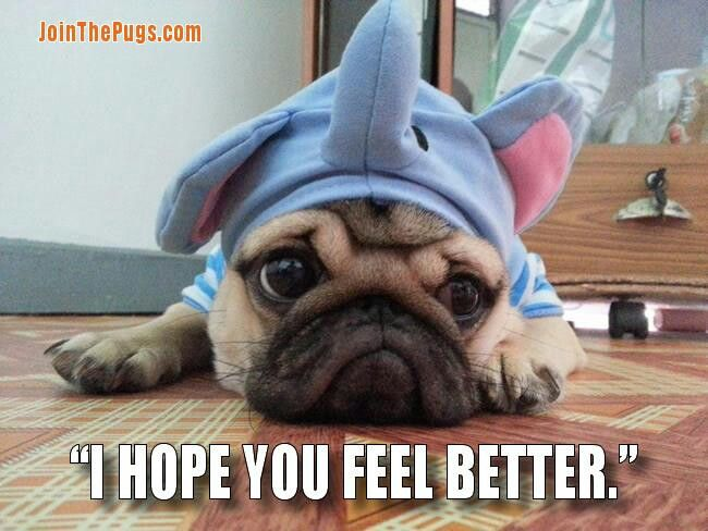 So Sorry Your Sick Feel Better Funny
