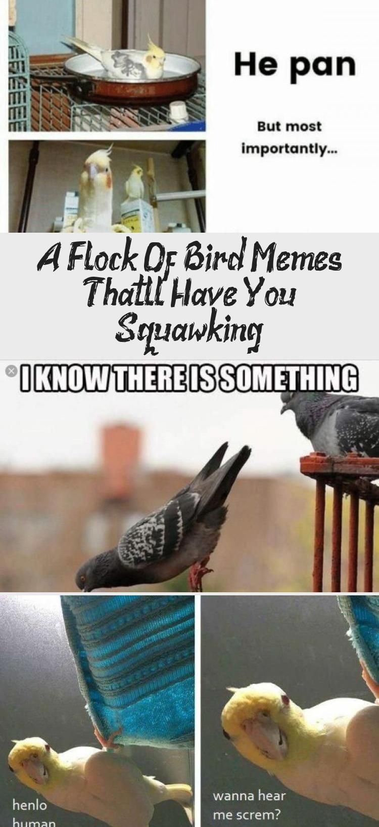A Flock Of Bird Memes That Ll Have You Squawking Humor Flock Of Birds Memes Bird