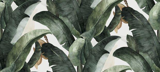 Botany Banana