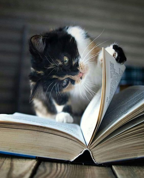 International Children's Book Day: 5 Classic Cat-Themed Books For Kids - CatTime