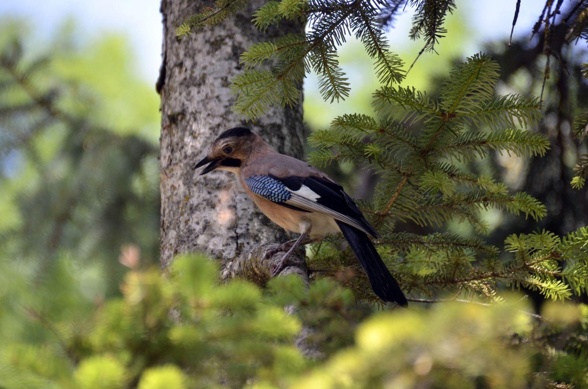 порой картинки леса животных птиц у кустарников этой подборке наши
