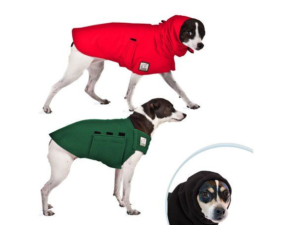 Rat Terrier Warm Climate Combo Dog