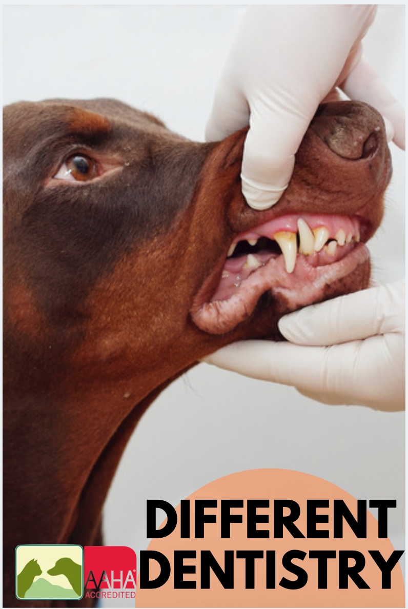 AnesthesiaFree Dental Cleanings Not All It's Cracked Up