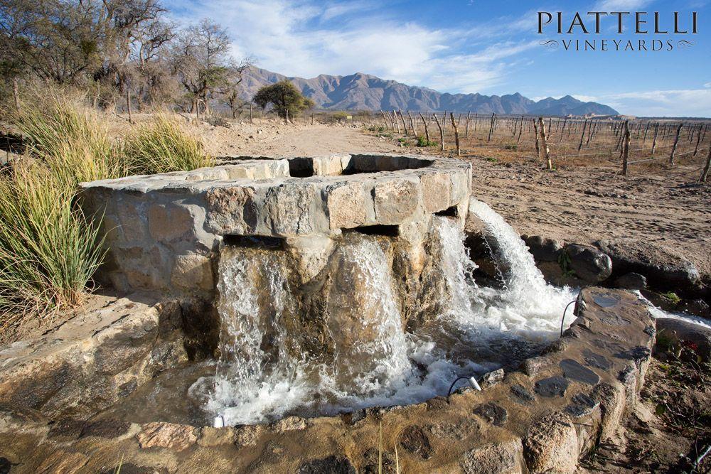 Irrigation at Piattelli Vineyards Cafayate winery.